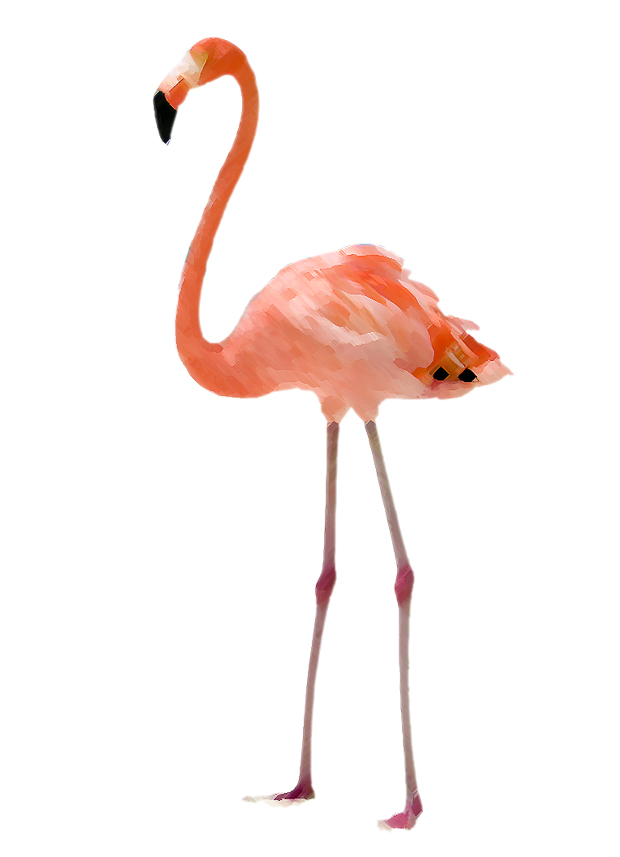 picture about Flamingo Printable called Hump working day giveaway Flamingo Printable - Dorsey Models